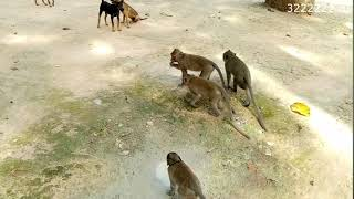 Собаки против обезьян и кошек