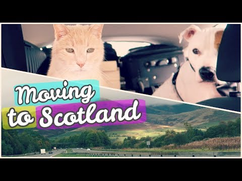 AMERICANS MOVE TO SCOTLAND! | Moving Vlog