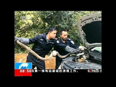 شاهد: العثور على كوبرا بطول 2.7 متر داخل محرك سيارة في الصين…  - نشر قبل 36 دقيقة
