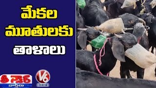Goats Mouth Tied For Not Eating Haritha Haram Saplings | Teenmaar News  Telugu News