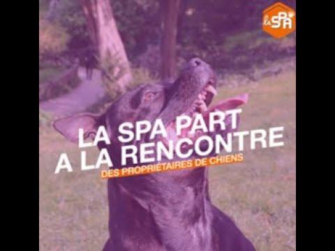 Les Bienfaits Des Animaux Sur L'Homme | La SPA Part à La Rencontre Des Propriétaires De Chiens.