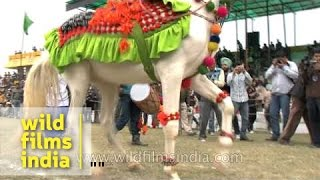 The dancing horse of Punjab at Rural Olympics!