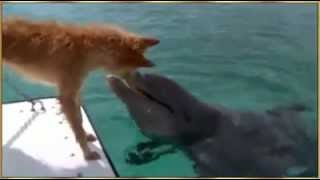 A friendship between a dog and dolphin! Must See!