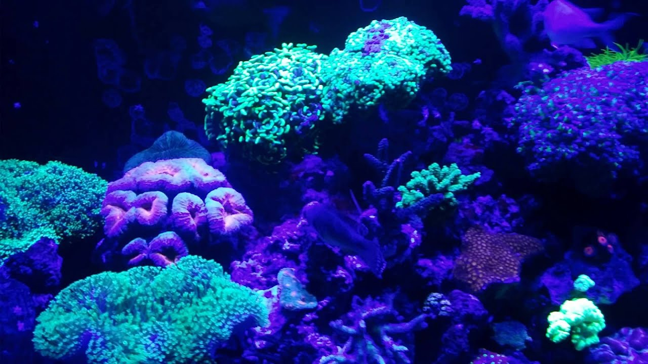 120 Gallon Mixed Marine Coral Reef Aquarium Fish Tank ...