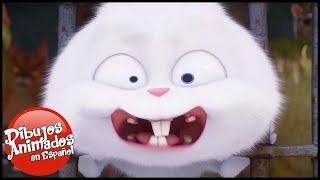 La Vida Secreta de tus Mascotas: Trailer 1 (Universal Pictures) [HD]| Dibujos Animados | Caricaturas