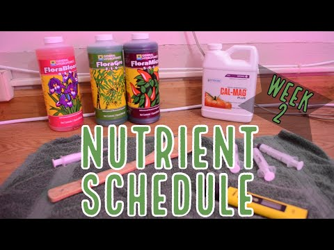 Week 2: How to Feed Autoflowers – Our Nutrient Schedule