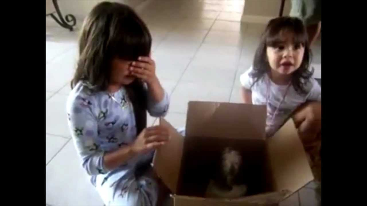 Touching beginning of new friendships - Puppy Surprise Present ...