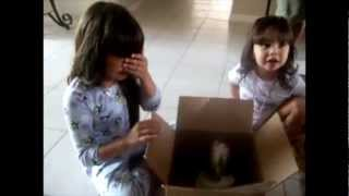 Repeat youtube video Touching beginning of new friendships - Puppy Surprise Present Compilation
