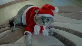 Новогодний костюм для кота.  Своими руками.
