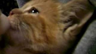 子猫 ミルク飲むのはやっ! thumbnail