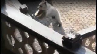 Соцсети на территории горнолыжного курорта Сочи разгуливает медведь