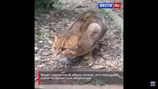 Вечер воскресенья 27 января  Топ Амурского яндекса и самая маленькая кошка
