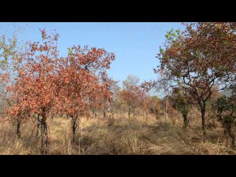 Tanzania Ruaha Natioal Park Baobab and Wildlife Ennio 2015