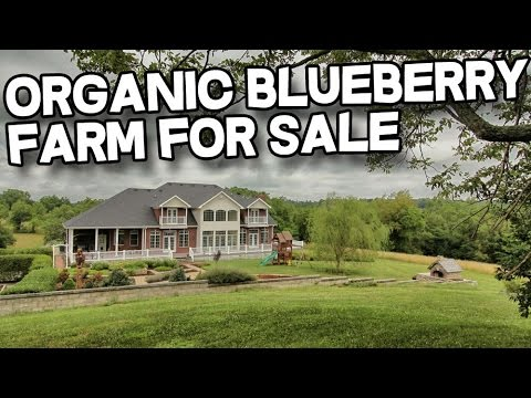 Kentucky Horse Property with Organic Blueberry Farm