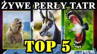 Unikatowe Zwierzęta Polskich Tatr TOP 5