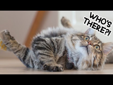 Funny Cats ?❤ - keep you smiling #2