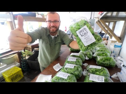 PACKING GREENS FOR CHRISTMAS MARKETS!!