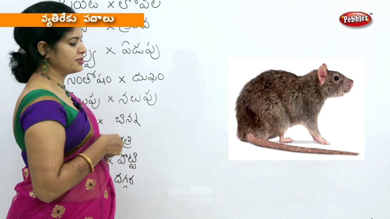 Writing Opposites in Telugu | Preschool Learning Videos | Kids Educational  video in Telugu