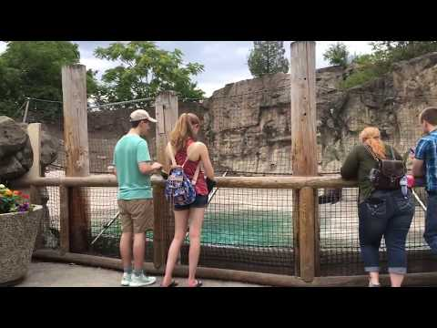 Brookfield Zoo: Pinniped Point Walkthrough