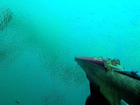 Guernsey Spearfishing  - Summer 2015   part 3