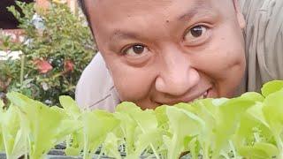 มาปลูกผัก คุยกันครับ หลังจากหายไปนาน