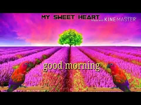 Odia good morning video