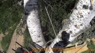видео Спил деревьев в Пушкино