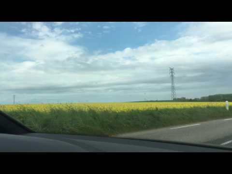 Yellow Fields In France