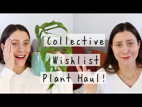 Collective Wishlist Plant Haul! | Wishlist Houseplants Haul! from YouTube · Duration:  13 minutes 39 seconds