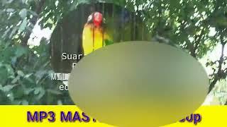 Download lagu Master Lovebird | MINOR Biang Kerok