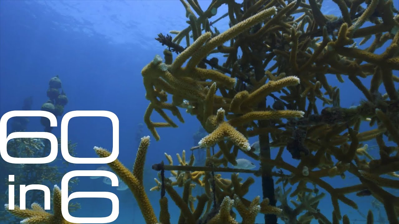 The race to save Florida's coral reefs
