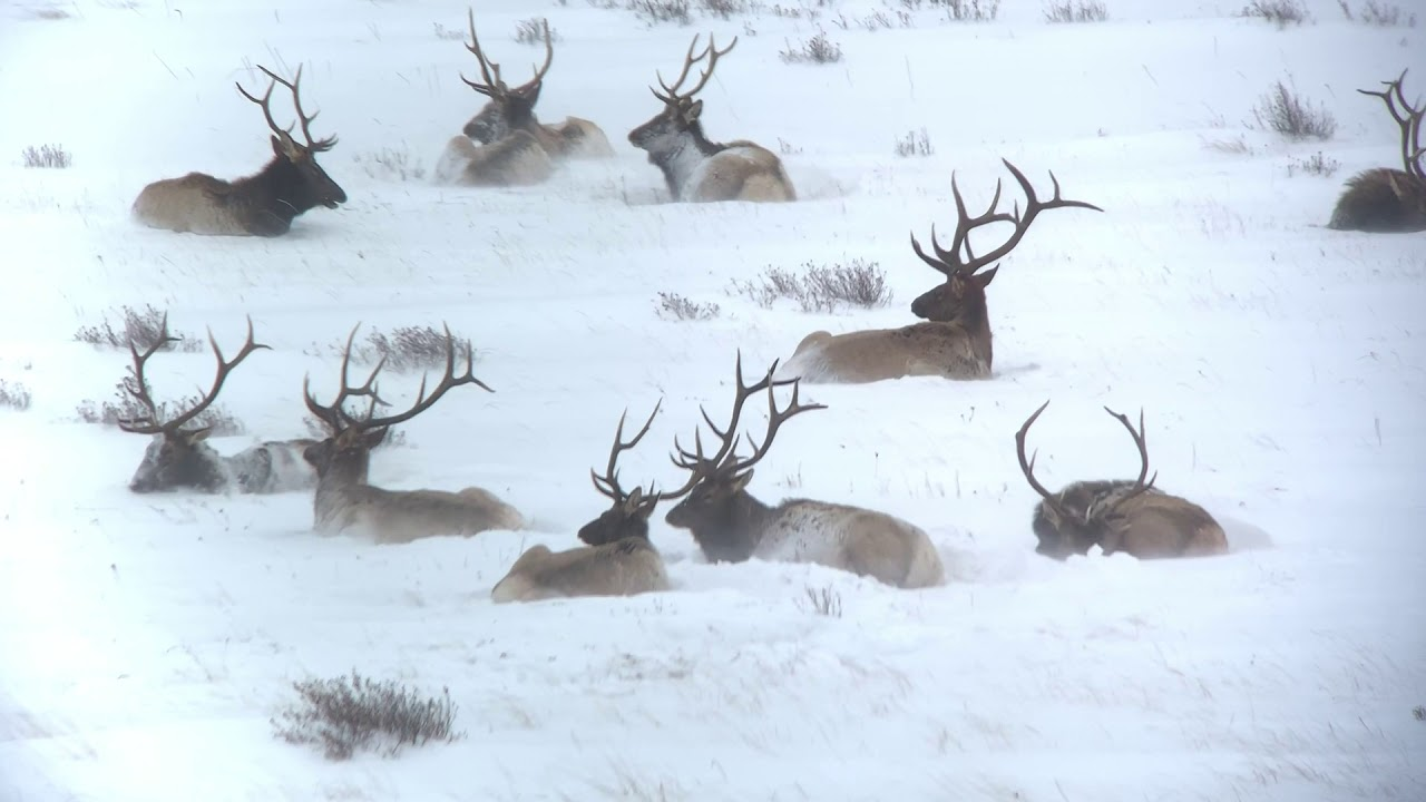 Late Fall Wildlife Watching in Jackson Hole 1