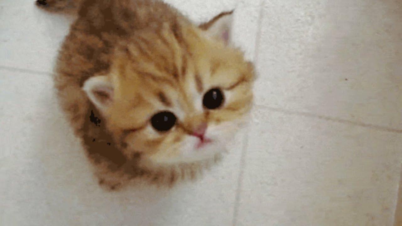 【ネコ癒し動画】 子ネコのキュンキュン動画その② ネコ好きのためのGIF動画まとめ