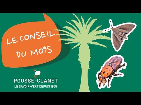 Les ravageurs du palmier - Le conseil de Mai par Pousse Clanet