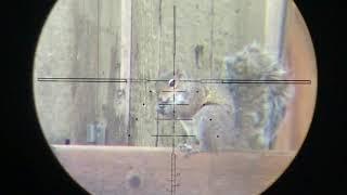 Benjamin Marauder Backyard Pest Control 17
