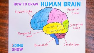 How To Draw Tнe Human Brain | Easy step by step tutorial