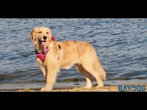 BAYDOG Chesapeake Harness