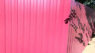 Забор из профнастила С8   от ООО Профнастил(, 2015-07-14T18:19:47.000Z)