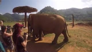 Chiang Mai 2018 - Elephant Nature Park