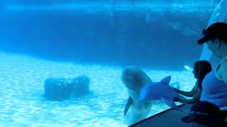 dolphin beluga whale baby playing dalphin