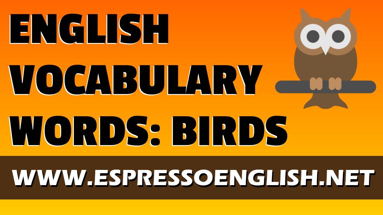 English Vocabulary Words: Birds – Espresso English