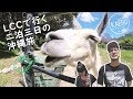 動物と戯れたり絶景カフェに行ったりした沖縄二日目【VLOG】