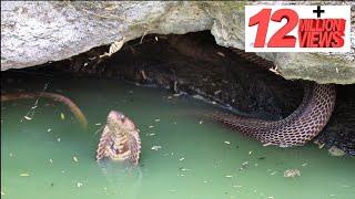 कुऐं मे गिरा कोबरा साप, देखिये कितना गुस्से वाला है ये कोबरा साप Rescue cobra snake from Ahmednagar