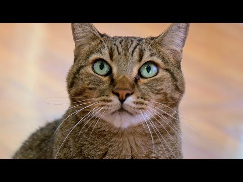How I Trained My Pets To Do Tricks - Cats Are Hard To Teach