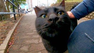 一旦は逃げた黒猫ちゃんがモフられに寄ってきた