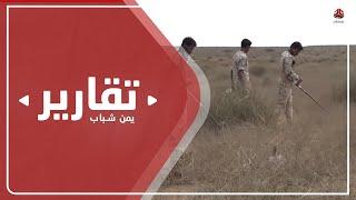 نفوق عشرات المواشي بانفجار ألغام حوثية شمال محافظة حجة