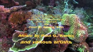 Paul Ranky Bali Dive Safari Island Tracking  Paul Ranky Copyright VideoClip01