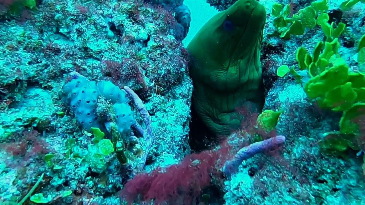 @Florida Scuba Divers Green Moray Eel Fun Facts