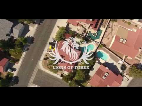 Lions of forex youtube