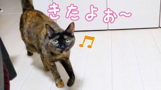 最近のサビ猫モモちゃんの甘え方が可愛すぎるんです…!